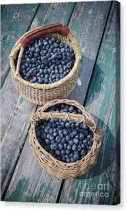 Picnic Table Canvas Print - Blueberry Baskets by Edward Fielding