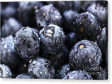 Blueberry Close Up Canvas Print by John Rizzuto