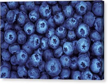 Blueberry Harvest Canvas Print by Greg Vaughn