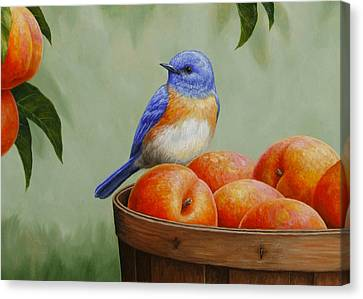 Peach Canvas Print - Bluebird And Peaches Greeting Card 3 by Crista Forest