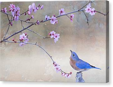 Bluebird And Plum Blossoms Canvas Print by Bonnie Barry