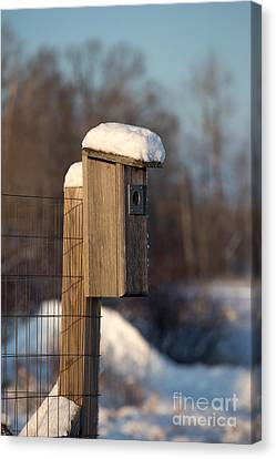Bluebird House Covered With Snow Canvas Print by Linda Freshwaters Arndt