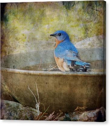 Bluebird Canvas Print by Melissa Bittinger