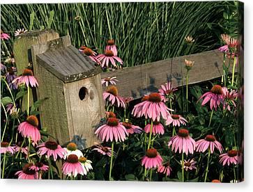 Susan Canvas Print - Bluebird Nest Box On Fence Near Purple by Richard and Susan Day