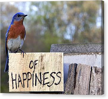 Canvas Print featuring the photograph Bluebird Of Happiness by John Crothers