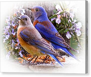 Bluebird Wedding Canvas Print by Jean Noren