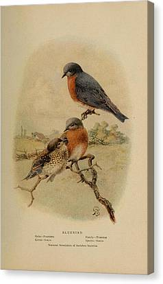 Bluebirds Canvas Print by Philip Ralley