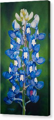 Bluebonnet Buffalo Clover Canvas Print
