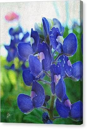 Bluebonnet Charmer Canvas Print