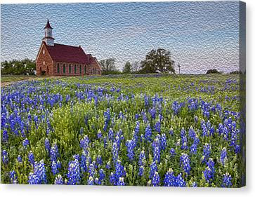 Bluebonnet Field And A Church In The Texas Hill Country - Oil Canvas Print by Rob Greebon