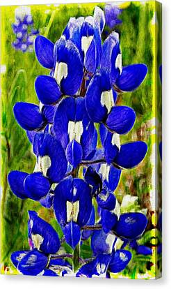 Canvas Print featuring the photograph Bluebonnet by Kathy Churchman