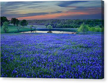 Bluebonnet Lake Vista Texas Sunset - Wildflowers Landscape Flowers Pond Canvas Print by Jon Holiday