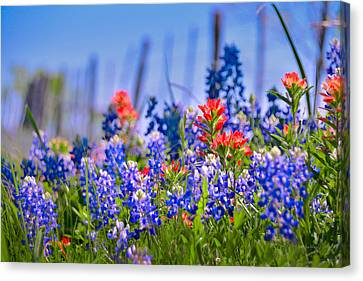 Canvas Print featuring the photograph Bluebonnet Paintbrush Texas  - Wildflowers Landscape Flowers Fence  by Jon Holiday