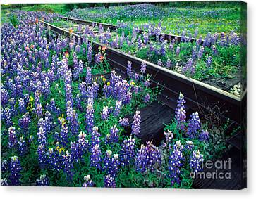 Bluebonnet Rails Canvas Print by Inge Johnsson