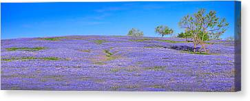 Canvas Print featuring the photograph Bluebonnet Vista Texas  - Wildflowers Landscape Flowers  by Jon Holiday