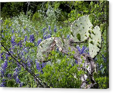Bluebonnets And Cactus Canvas Print