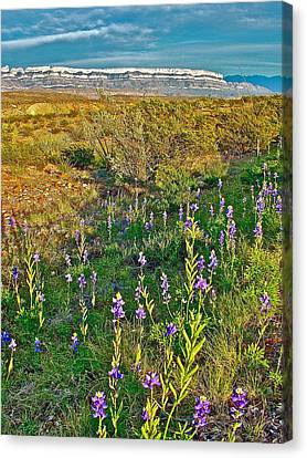Bluebonnets And Creosote Bushes In Big Bend National Park-texas Canvas Print