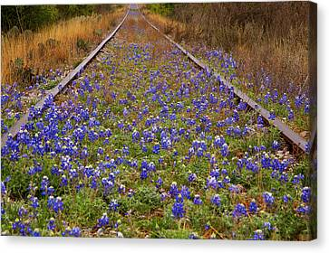 Bluebonnets And Train Tracks Canvas Print by Paul Huchton