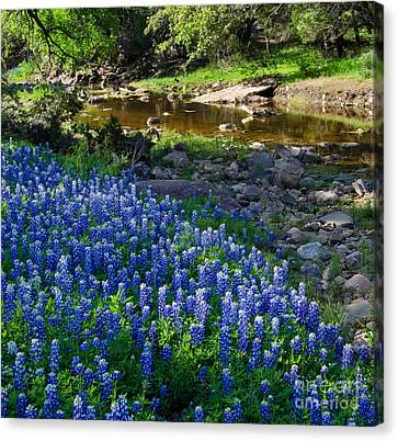 Bluebonnets By The Stream Canvas Print