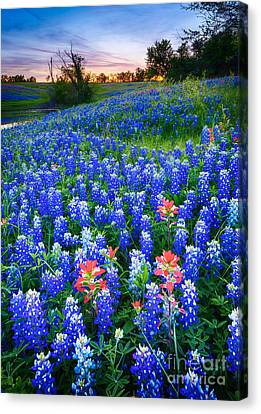 Bluebonnets Forever Canvas Print