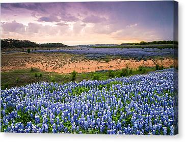 Bluebonnets On The Colorado River Bank - Wildflower Field In Texas Canvas Print by Ellie Teramoto