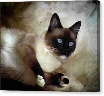 Blueeyed And Brownmasked Canvas Print by Gun Legler