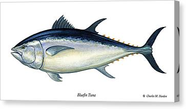 Squid Canvas Print - Bluefin Tuna by Charles Harden
