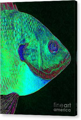 Bluegill Fish P128 Canvas Print