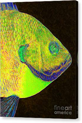 Bluegill Fish P28 Canvas Print by Wingsdomain Art and Photography