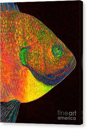 Bluegill Fish Canvas Print by Wingsdomain Art and Photography