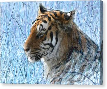 Bluegrass Tiger Canvas Print
