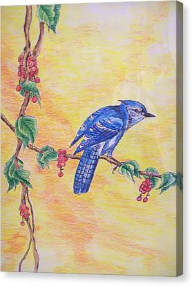 Bluejay Canvas Print - Bluejay by Tom Rechsteiner