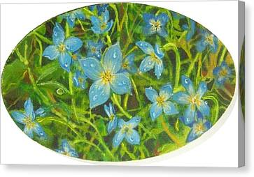 Bluets Of The Shenandoah  Canvas Print