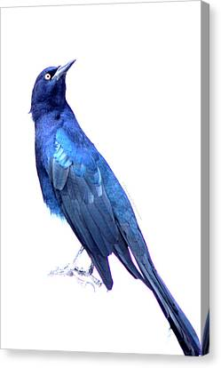 Bluish Bird Canvas Print by DerekTXFactor Creative
