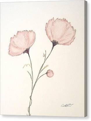 Blush Peonies Canvas Print by Christine Corretti