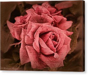 Blush Canvas Print by Wallaroo Images