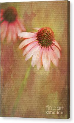Canvas Print featuring the painting Blushing by Linda Blair