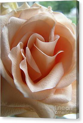 Canvas Print featuring the photograph Blushing Rose by Margie Amberge