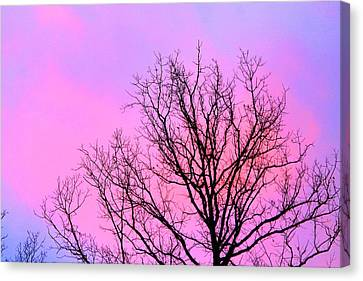 Canvas Print featuring the photograph Blushing Sky by Candice Trimble