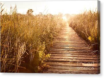 Boardwalk And Morass Grass In Sun Rising  Canvas Print