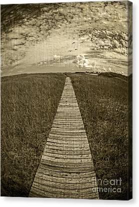 Boardwalk Through The Dunes Canvas Print by Edward Fielding