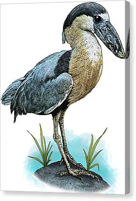 Boat Billed Heron Canvas Print by Roger Hall