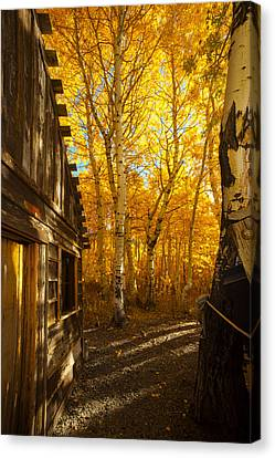 Boat House Among The Autumn Leaves  Canvas Print by Jerry Cowart