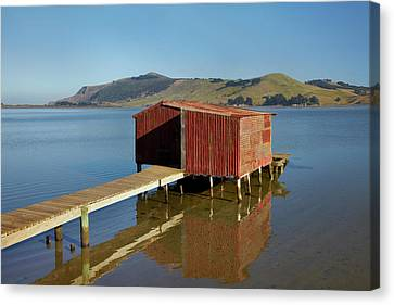 Boat Shed, Hoopers Inlet, Otago Canvas Print by David Wall