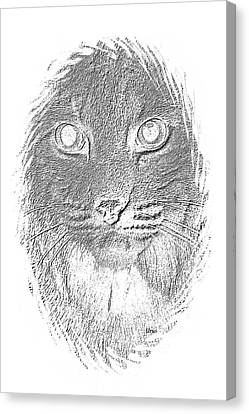 Bobcat In Charcoal Canvas Print