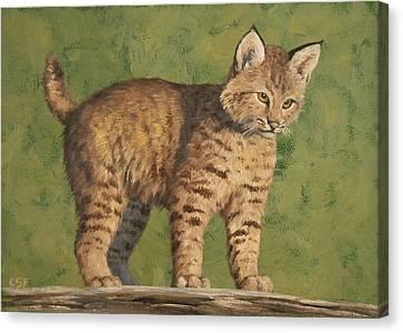 Bobcat Kittens Canvas Print - Bobcat Kitten by Crista Forest