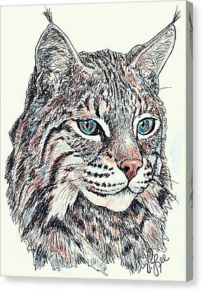 Bobcat Portrait Canvas Print by VLee Watson