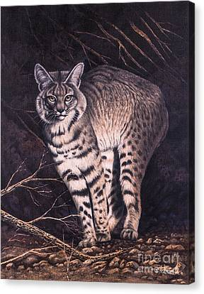 Bobcat Canvas Print by Ricardo Chavez-Mendez