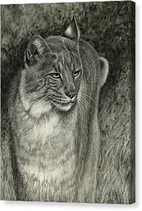 Bobcat Emerging Canvas Print by Sandra LaFaut