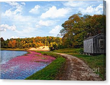 Canvas Print featuring the photograph Bog by Gina Cormier